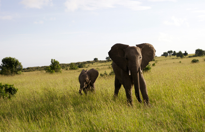 unique-holiday-gifts-elephants