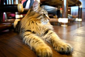 Cat Cafes: The Newest Trend Coming from Tokyo