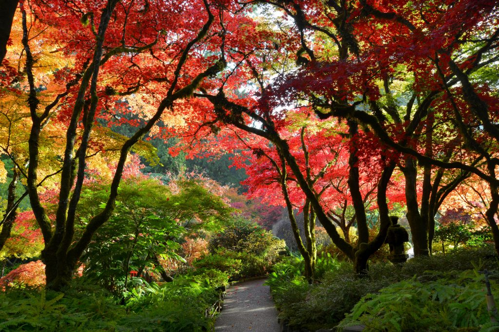5 awesome fall drives in canada travel style - Best time to visit butchart gardens ...